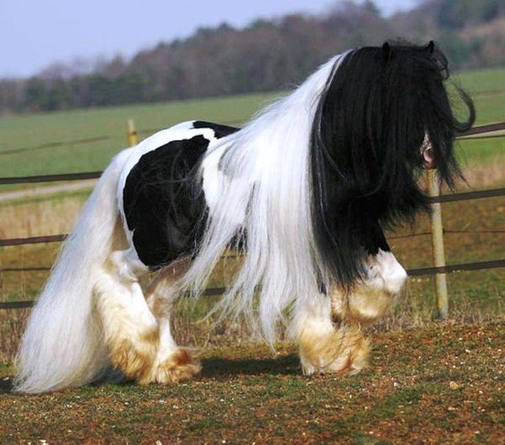 wooooooooo caballos horses pinterest caballos y muchas. Black Bedroom Furniture Sets. Home Design Ideas