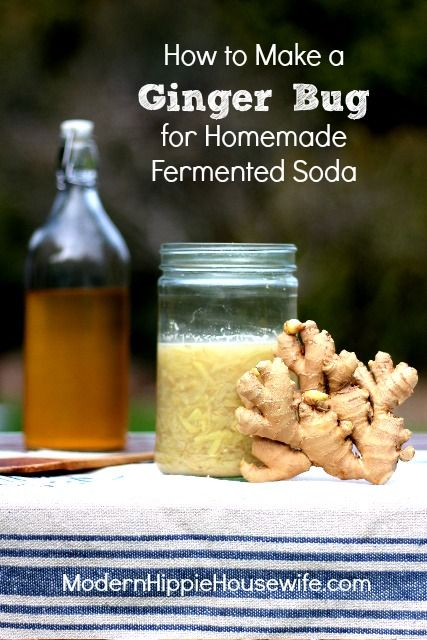 Homemade ginger beer a rewarding and nutritious treat. But first, you need to know how to make a ginger bug for homemade fermented soda!