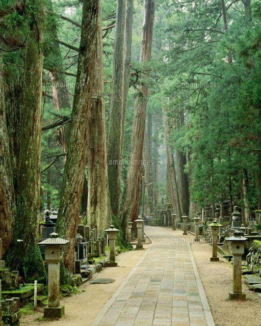 高野山町石道 奥の院参道 (c)TOSHITAKA MORITA/SEBUN PHOTO