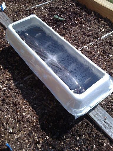 Egg cartons as green houses for growing plants from seeds