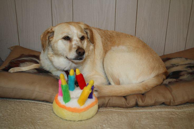 Fawns birthday cake