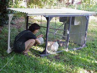 Las 25 mejores ideas sobre gallinas de traspatio en for Como hacer un criadero de peces