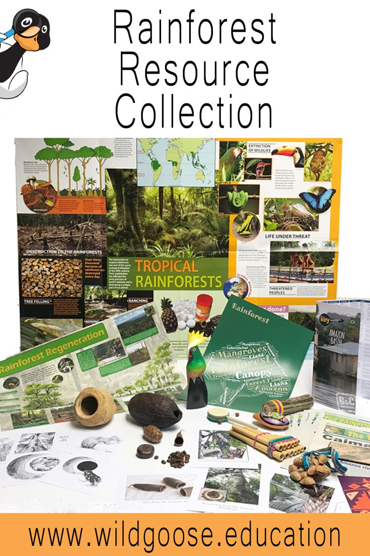 We Have Updated And Improved Our Rainforest Resource Collection
