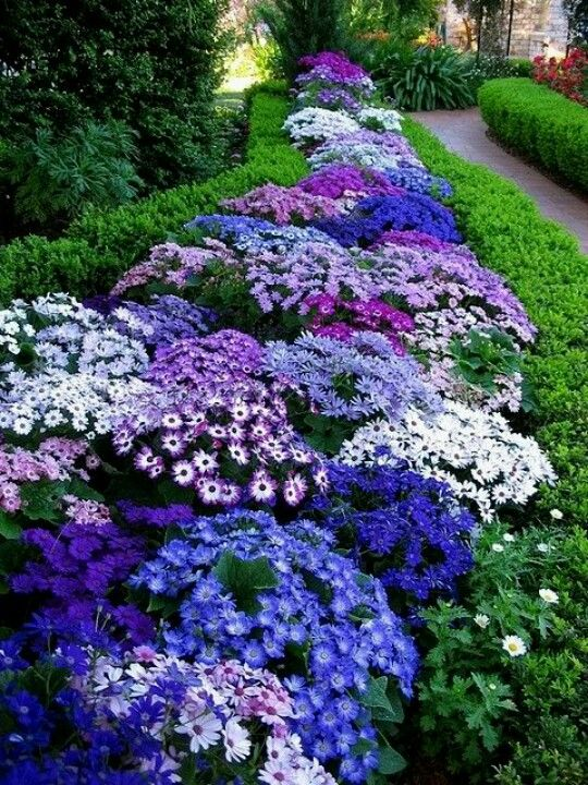 Varying shades of blue, purple, and white. Blue (and white) flower ideas: aster, lobelia, dwarf blue jacob's ladder, hydrangea,