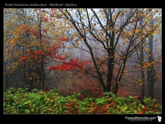 Forêt brumeuse multicolore Prise au mont Shefford, Québec, Canada http://www.paskalrainville.com/