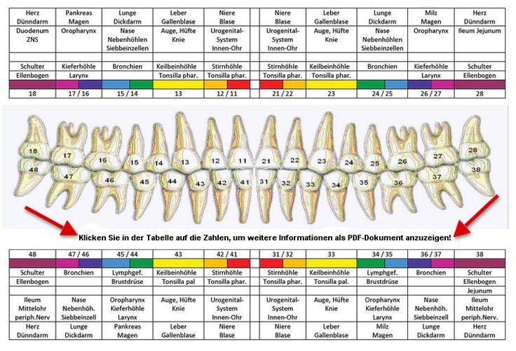 Ganzheitliche Zahnheilkunde Dr. Burk » Leistungsspektrum » Zähne und Organbezüge: Zahn-Herdschema