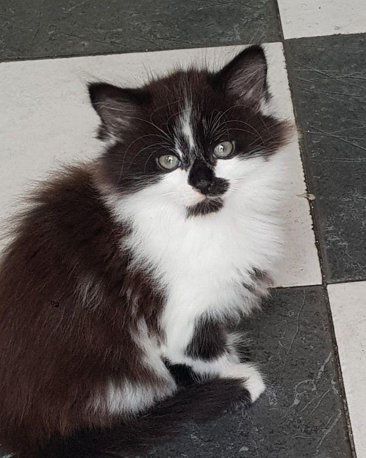 Pin by Paul Fox on Maxkitt Black, white kittens, White