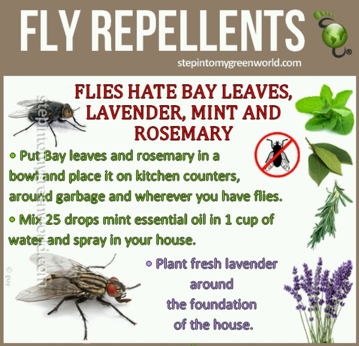 Ordinaire Fly Repellent  As If There Needs To Be A Good Reason To Plant Lavender!