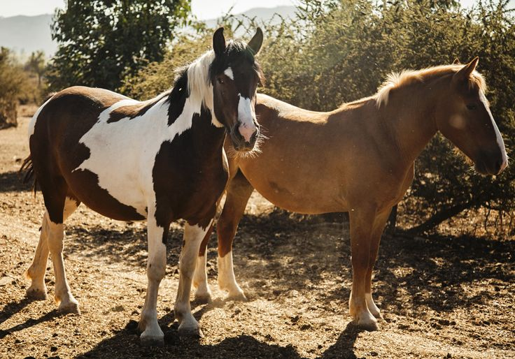 Left, a Tobiano horse for which our Tobiano Pinot Noir is named and left a Lucero horse for which our Lucero Syrah is named.