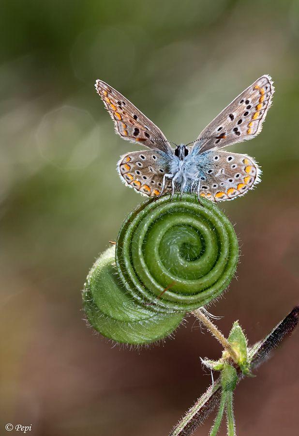 60 - La espiral de la vida, ahora expresada en una extraña planta donde posa una especial mariposa