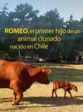 http://www.explora.cl/descubre/articulos-de-ciencia/naturaleza-articulos/animales-articulos/6884-romeo-el-primer-hijo-de-un-animal-clonado-nacido-en-chile