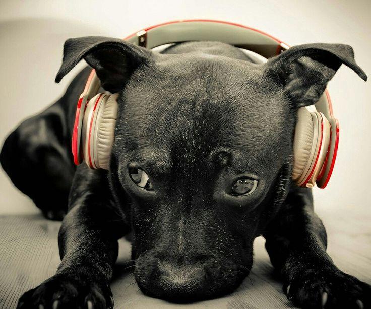 Shhhh i listening music