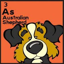 Image result for dog table of elemutts australian shepherd