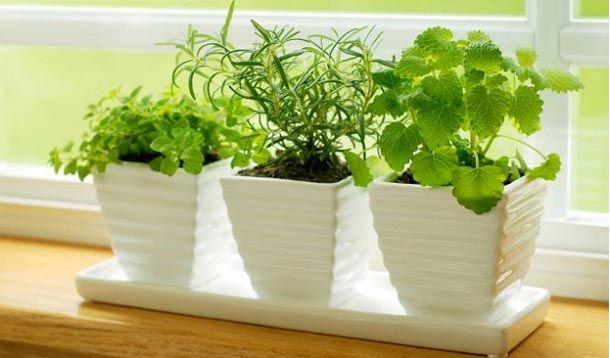 » 50 plantas que atraen energías positivas según la sabiduria ancestral