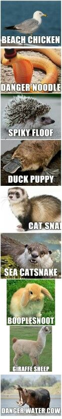 Funny other names for animals....LOL danger noodle.