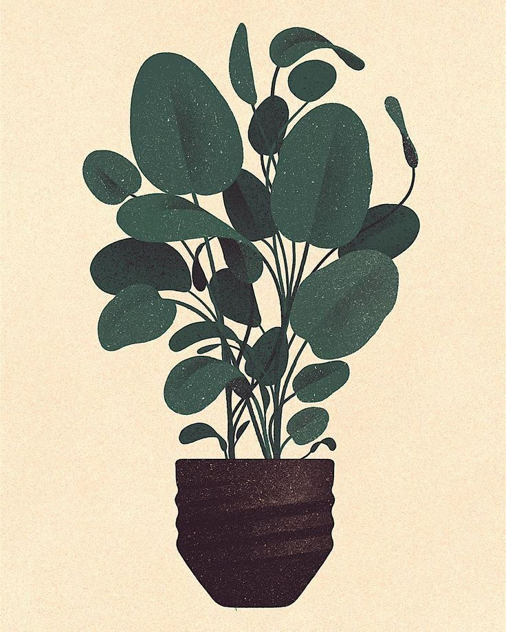 Karolis Strautniekas plant illustration