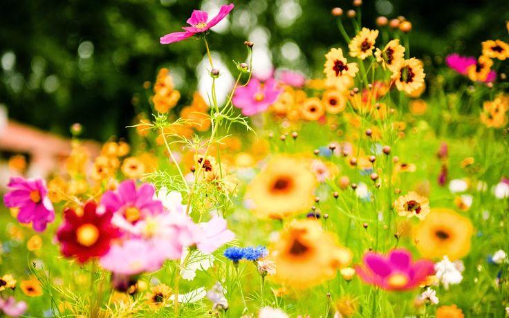 Blogul Dianei: Floriile - Onomastica celor cu nume de flori