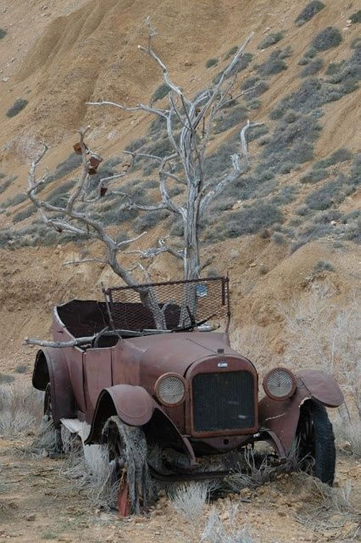 Abandoned car with tree growing