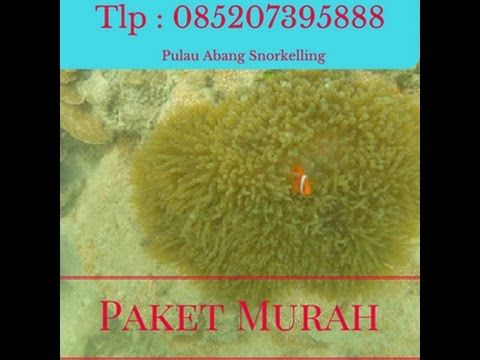 pulau abang resort 085207395888