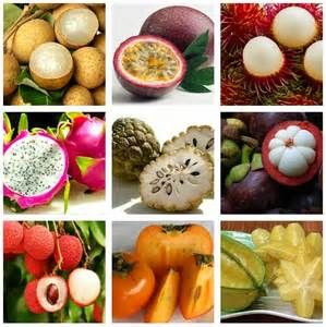 Rambutan fruit salad - Bing Images