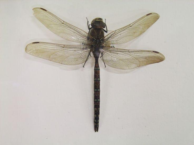 Museum of Natural History, Dublin,