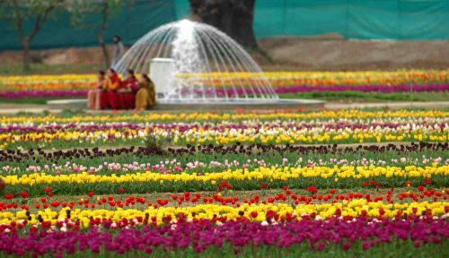 Top Amazing Facts about Tulip Festival Kashmir  Tulip garden is Asia's biggest garden, Tulip festival is celebrated from 15 to 20 days in April. It is showcase around 300,000 tulip blossoms of more than 70 types. These are amazing facts of Tulip festival.