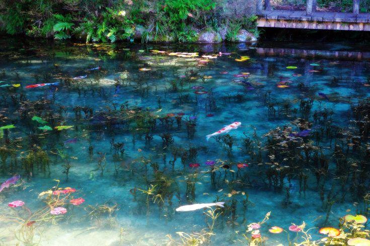「岐阜県 モネの池」の画像検索結果