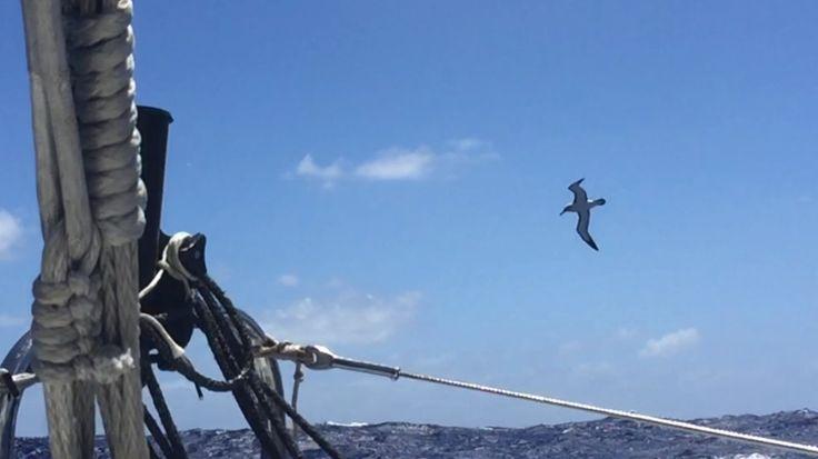 Albatros vola su Italia. Gaetano  entra nei mari del Sud.