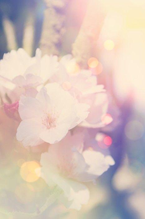 Vintage Blossom Spring Art from $31.99 | www.wallartprints.com.au #SpringPictures #NatureArt
