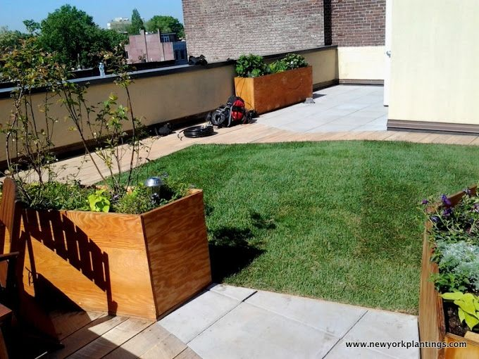 """Another Rooftop """"Greenroofing"""" style lawn in NYC, New York by New York Plantings Garden Design. New York Plantings Garden Designers and Landscape contracting 432 E 14st  New York, NY 10009 Call: 347-558-7051    site url:   http://www.newyorkplantings.com/Home.php  info@newyorkplantings.com"""