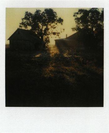 Tarkovsky's polaroids