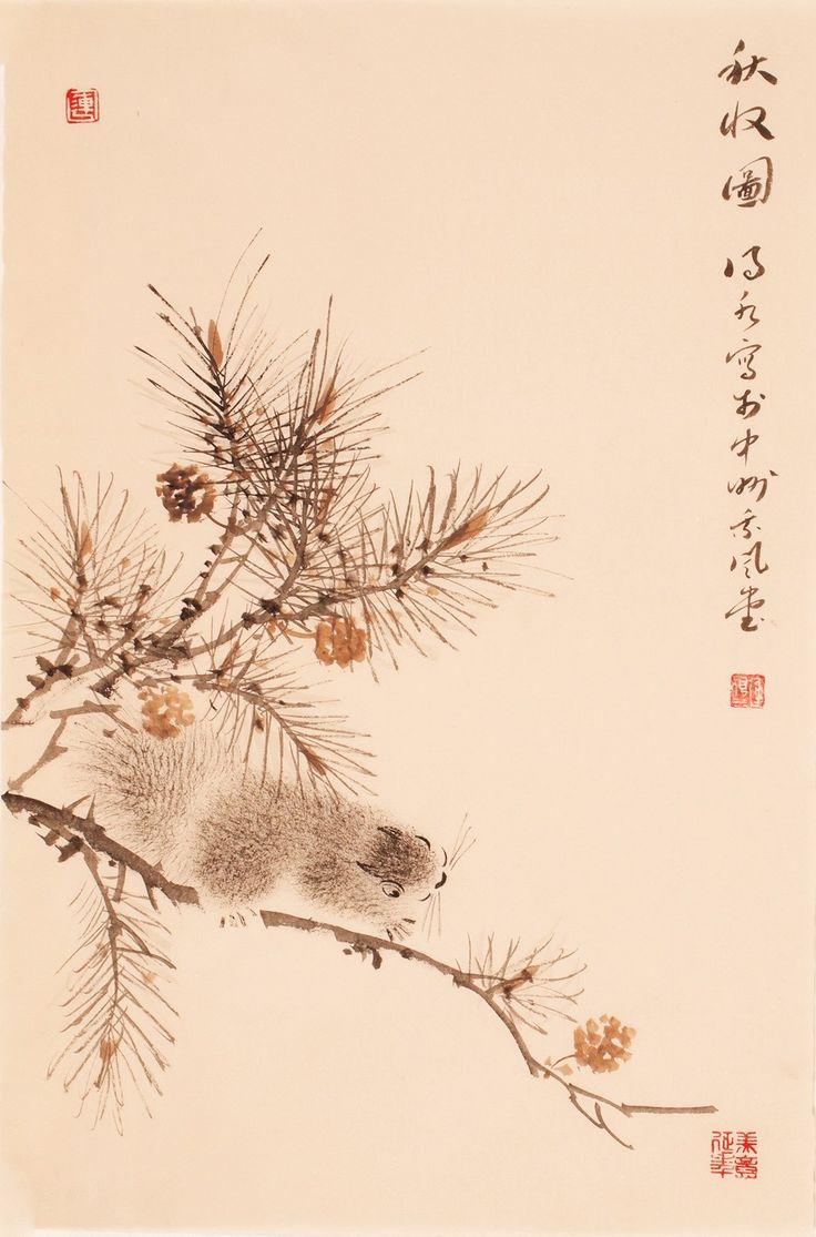 Squirrels - CNAG000797