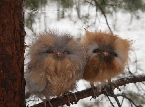 """worldofthecutestcuties: """" Cute baby owls. """" Are these real owls? They are just too cute."""