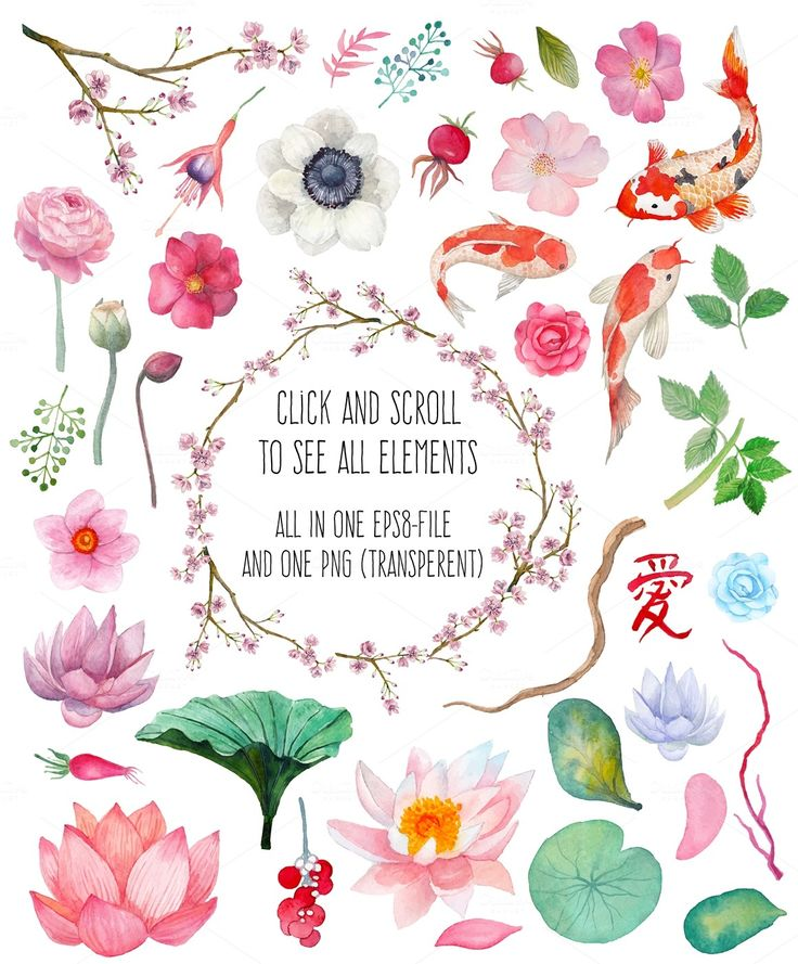 Oriental flowering by Eisfrei on Creative Market