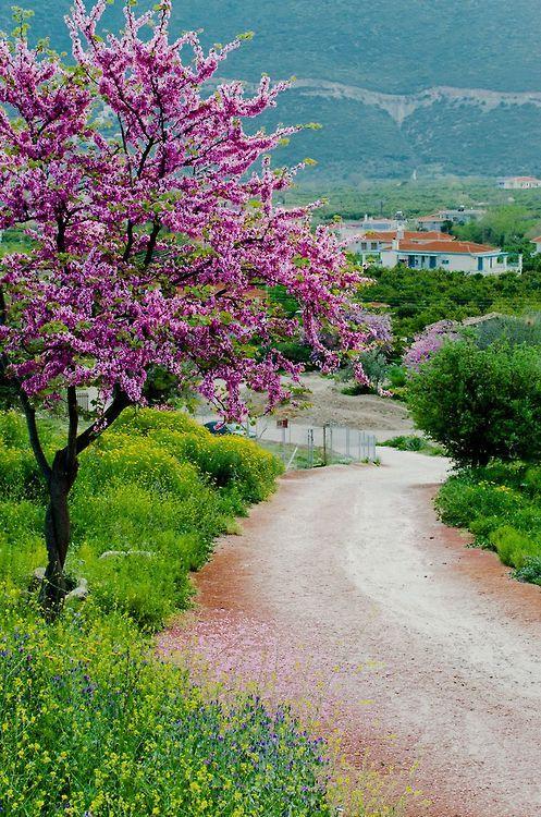 Ἄνοιξη στην Επίδαυρο ~ Spring inEpidavrus, pref. of Argolida