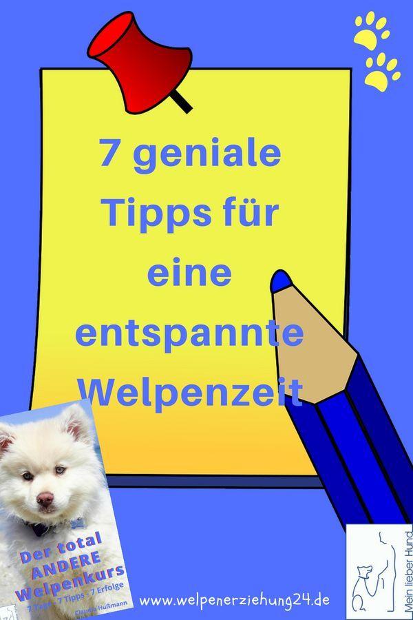 Hast Du Noch Probleme Mit Deinem Welpen Oder Bist Du Schon Entspannt Welpen Welpenerziehung Hunde Erziehen
