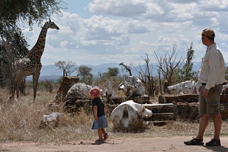 Beautiful #Giraffe in #Ruaha National Park. Do you see how close the people are? No fence only grass and bushes separate us from natures creation. #contourairse #tanzania #safari #welovetravel #litemeravallt #natureporn #funforthewholefamily #pin #fantasticearth #amazingearth #wildanimals