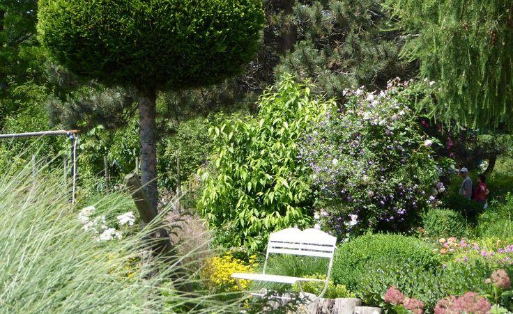 Dieser Kugelbaum bleibt auch im Winter grün. Die Scheinzypresse (Chamaecyparis lawsoniana) lässt sich mit regelmäßigem Schnitt gut formen