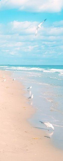 Gaviotas en la orilla .-