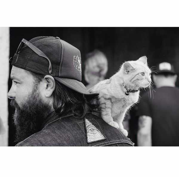 Harter Kerl mit einem Herz für Tiere: Dieser Biker rettet ein schwer verletztes Kätzchen