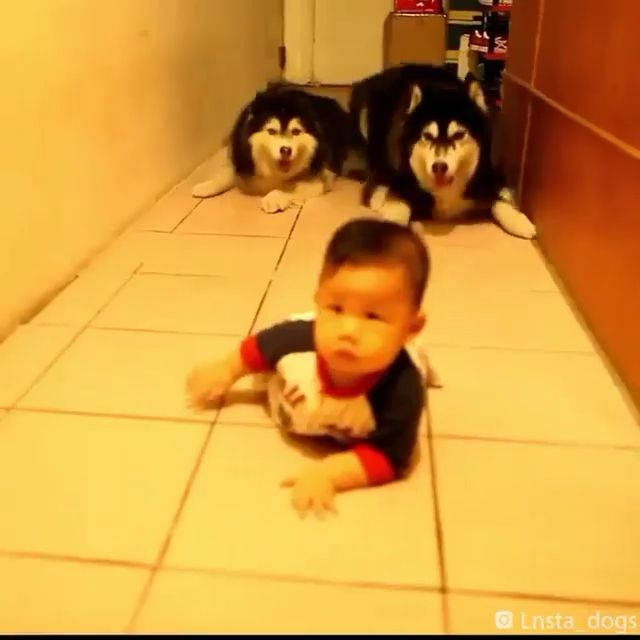 Funniest Video Of Dogs & Little Baby 😬😬