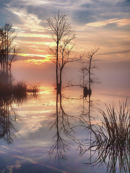 ✮ Foggy River Evening Reflections
