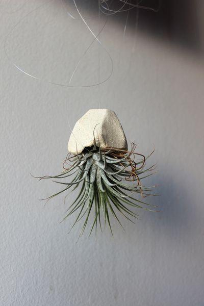 Airplant (Tillandsie) mit hängendem Blumentöpfchen von Ancient Premium Pics auf DaWanda.com