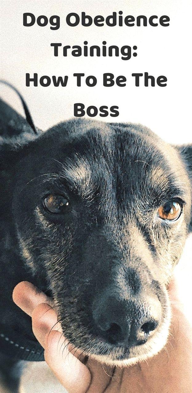Dog Training Greensboro Nc Dog Training Operant Conditioning