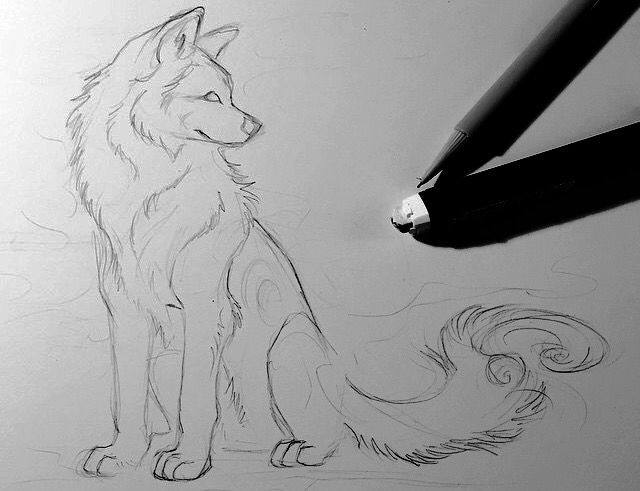 49 best how to draw wolves images on pinterest draw wolf how to draw a wolf ccuart Choice Image