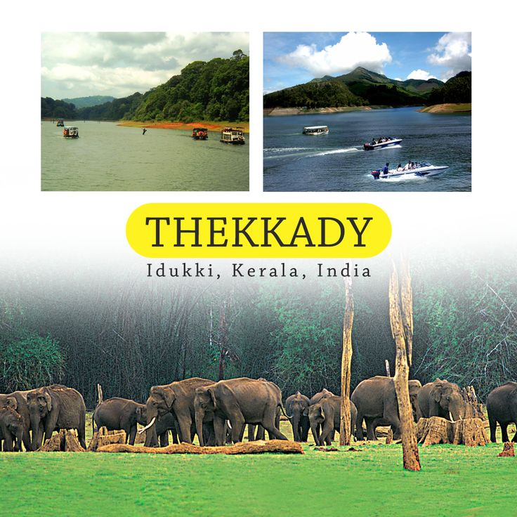 #Thekkady (#Idukki district) is the location of the #Periyar National Park, which is an important tourist attraction in the #Kerala state of #India.  Thekkady is located about 257 km (160 mi) from #Trivandrum, 114 km from #Madurai City and Madurai Airport, 145 km from #Cochin International Airport and 114 km from #Kottayam railway station. Thekkady is located near to #Kerala-#TamilNadu border. The sanctuary is famous for its dense evergreen, semi-evergreen, moist deciduous forests and…