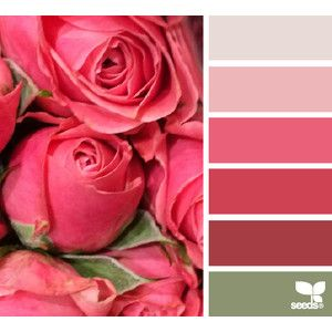 design seeds | for all who ♥ color