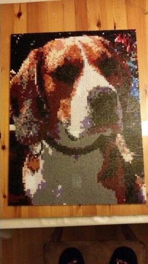 My dog  #dog #beagle #perler #hama #pearlbeads #big #brown #christmasgift  #pet #animal #hobby #creative #black #love