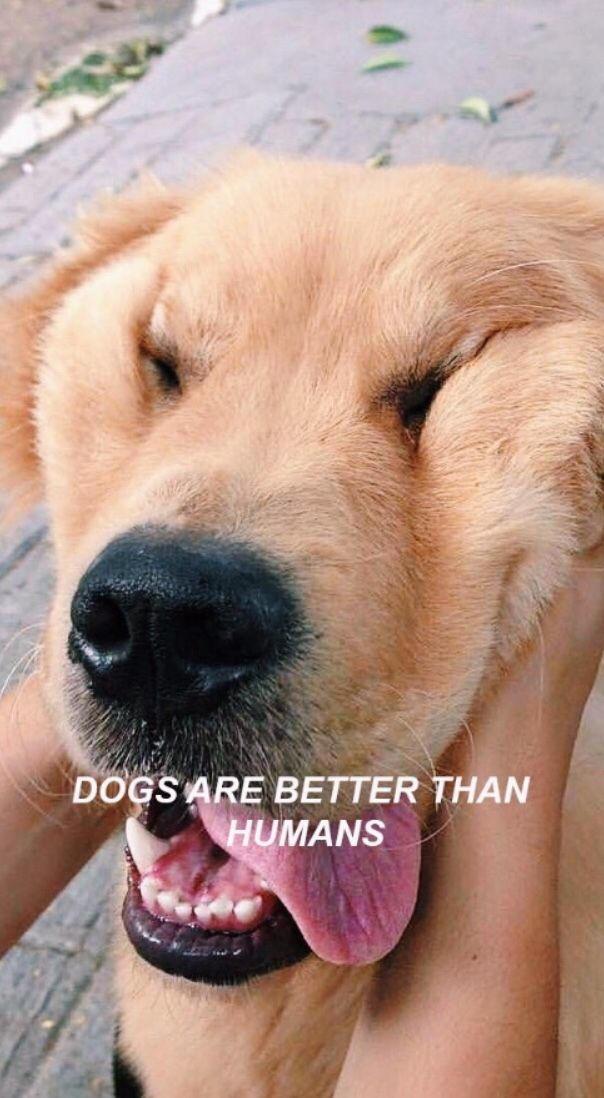 Cute Doggo Memes Home Facebook