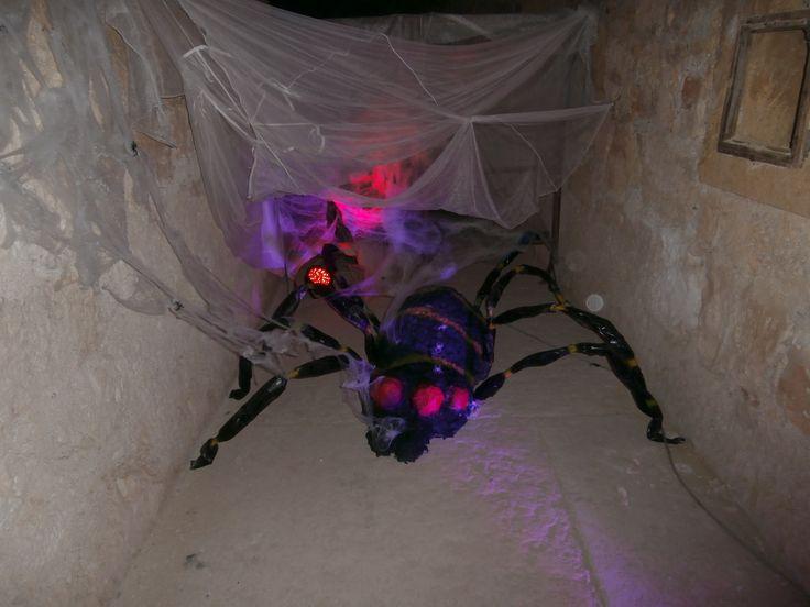 Cavoli ecc il nostro ospite che tesse le sue ragnatele ordite....